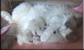 kattunger gis bort kongsberg